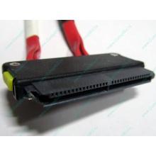 SATA-кабель для корзины HDD HP 451782-001 459190-001 для HP ML310 G5 (Барнаул)